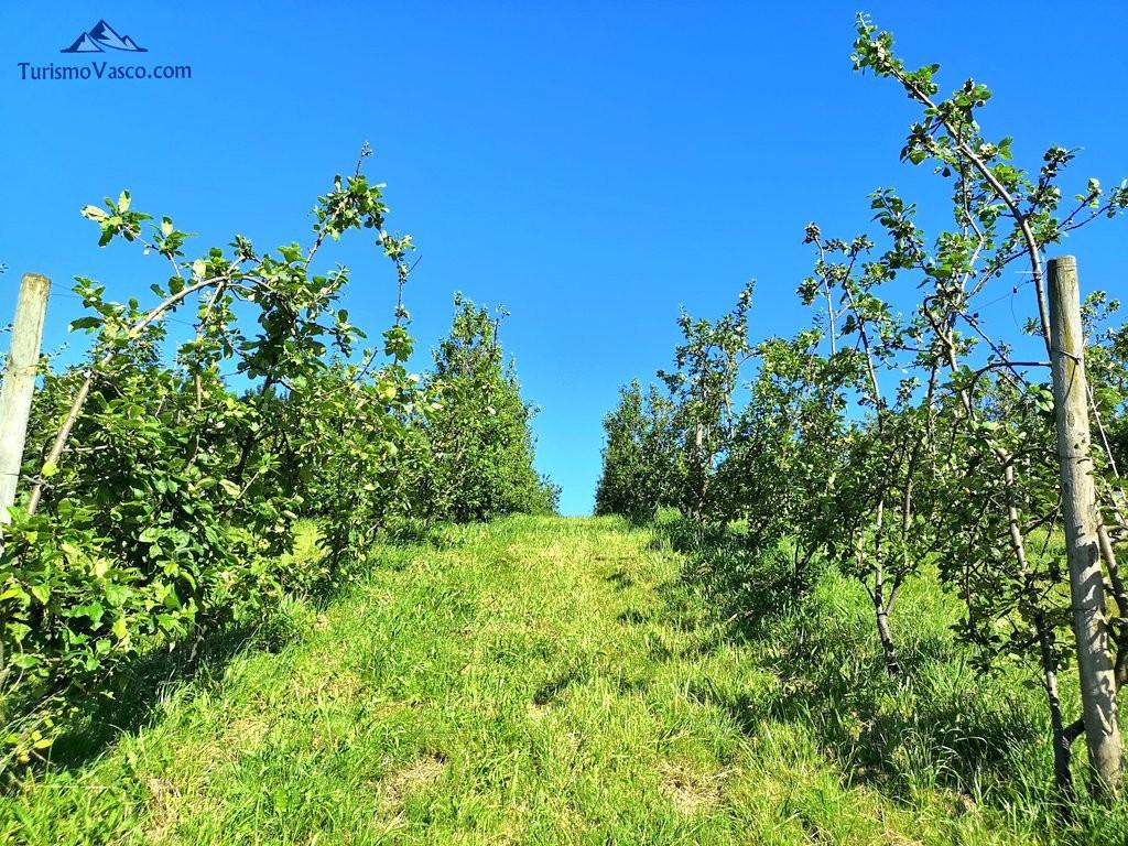 Manzanos, Sidreria Arizia Zarautz