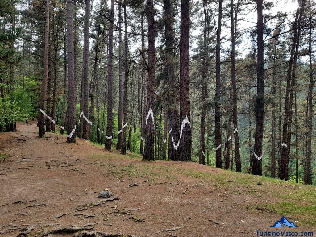 Montañas en el bosque de oma, el bosque pintado