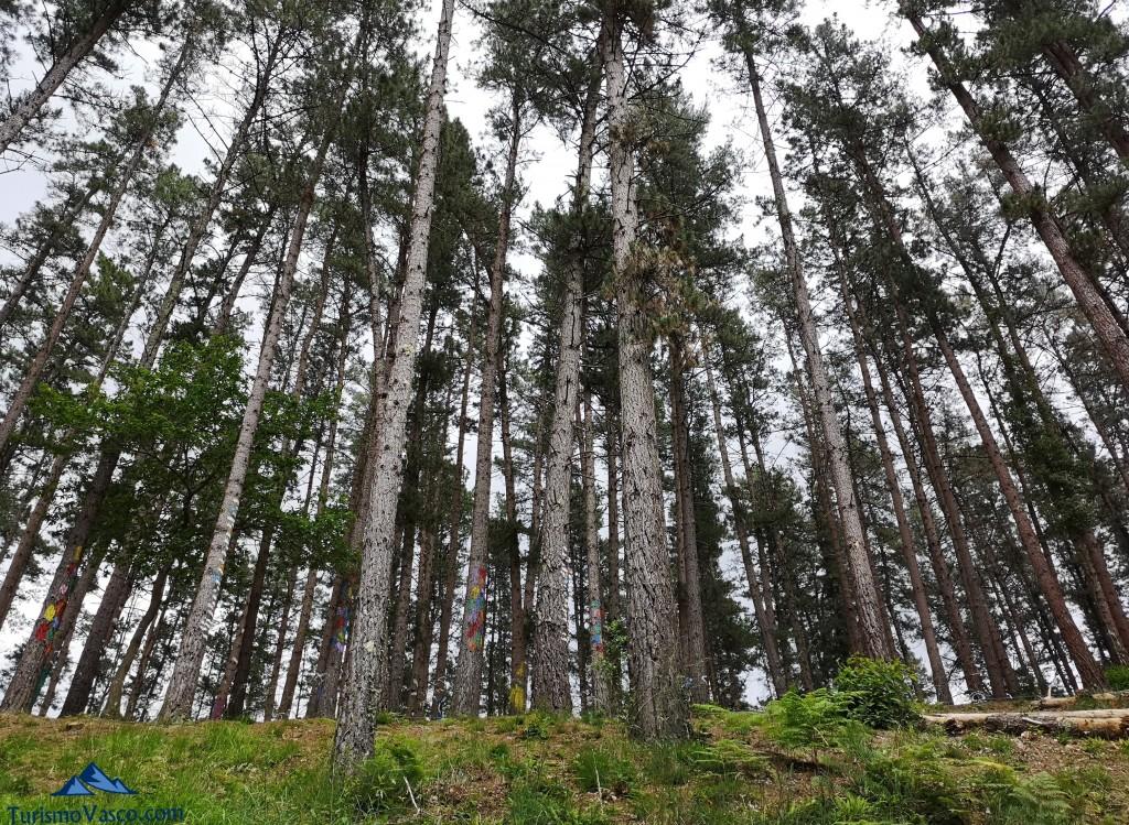 Panoramica del Bosque de Oma