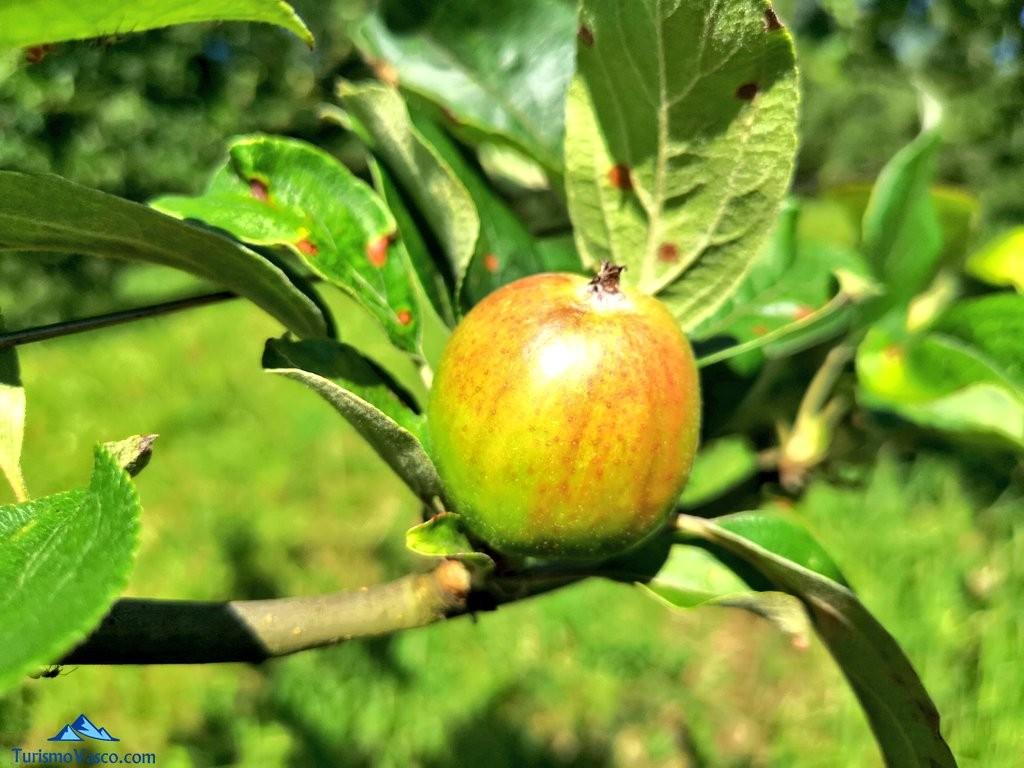 manzana de la Sidreria Arizia Zarautz