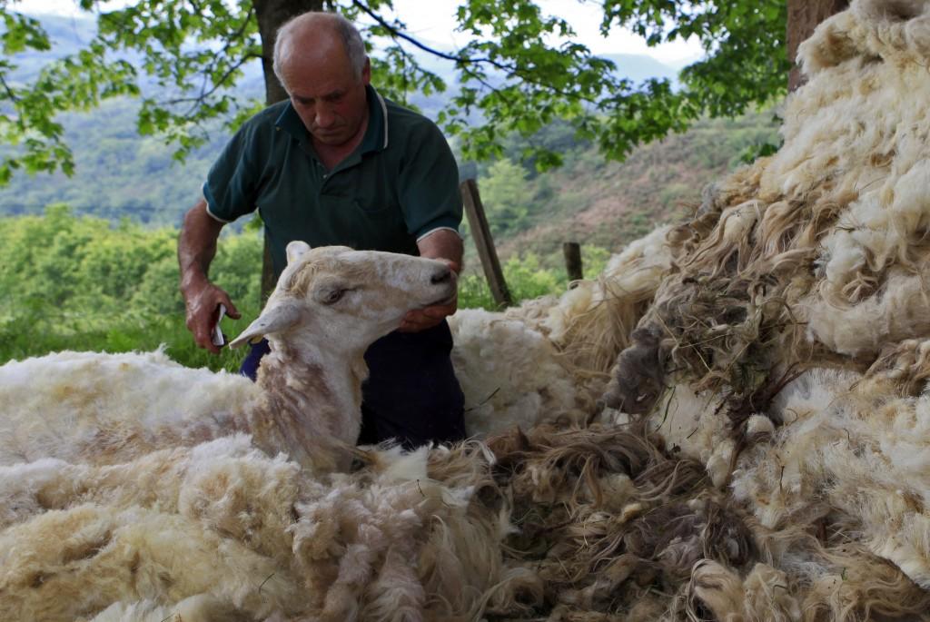 Valle de baztan, ovejas
