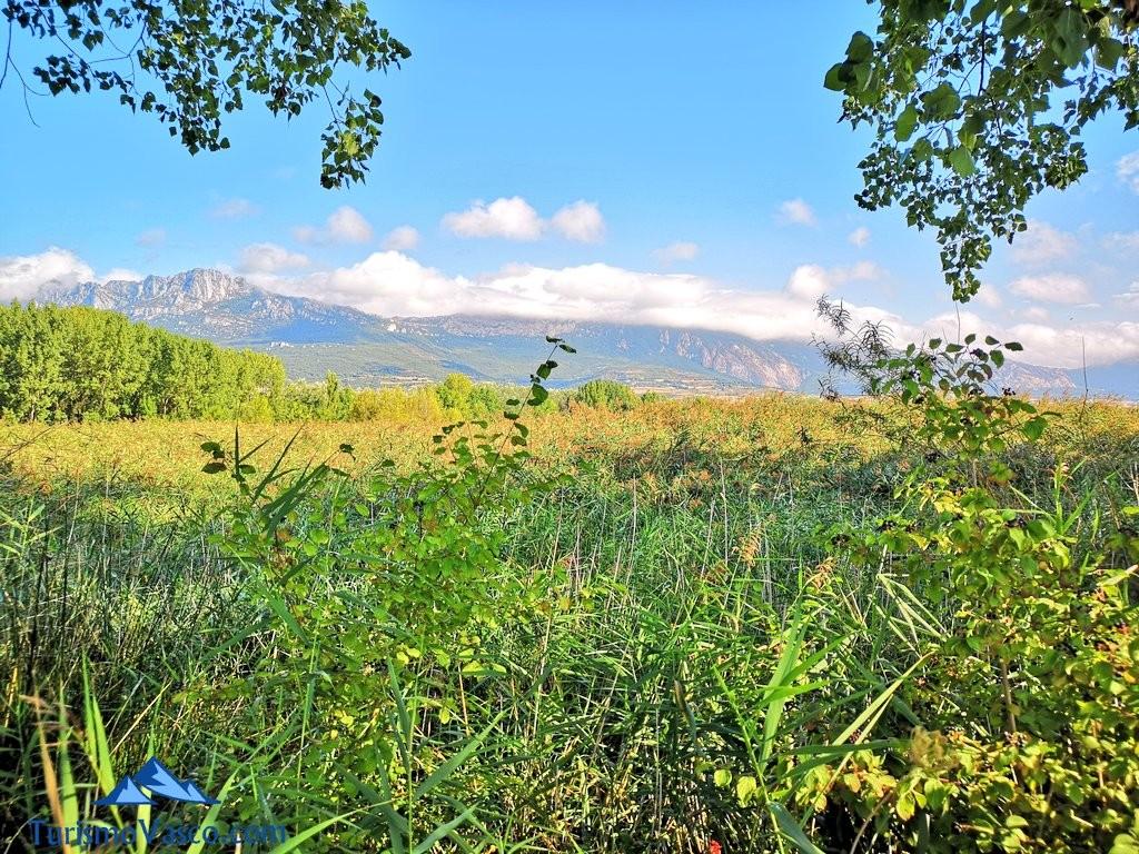 vegetacion de las lagunas de laguardia, Rioja Alavesa