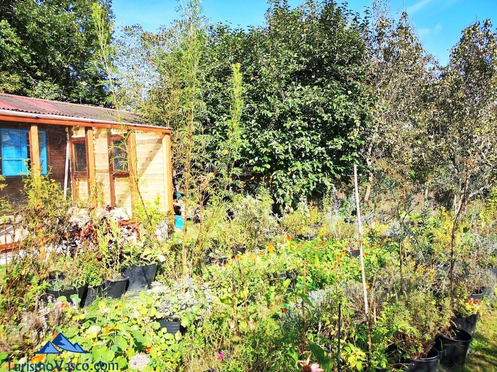 Taller y jardin, taller de plantas medicinales en Zeanuri