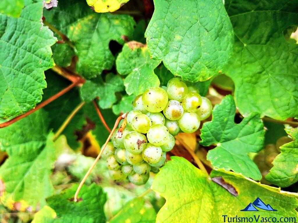 Uva de Astobiza