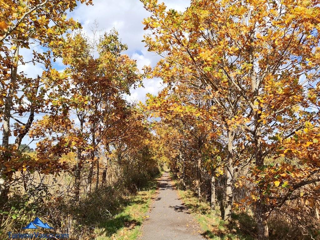 Paseo entre arboles ruta Urdaibai Gernika Kortezubi