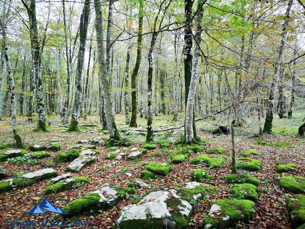 bosque Salto del Nervión