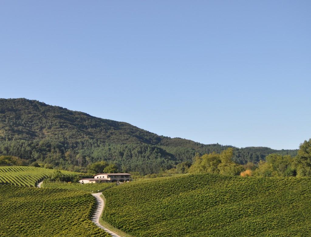 vistas bodega y viñedo Hiruzta