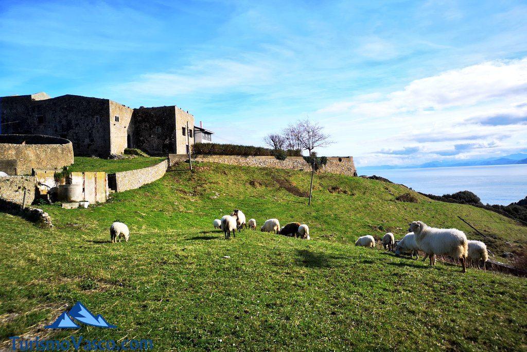 ovejas, Faro Santa Catalina de Lekeitio