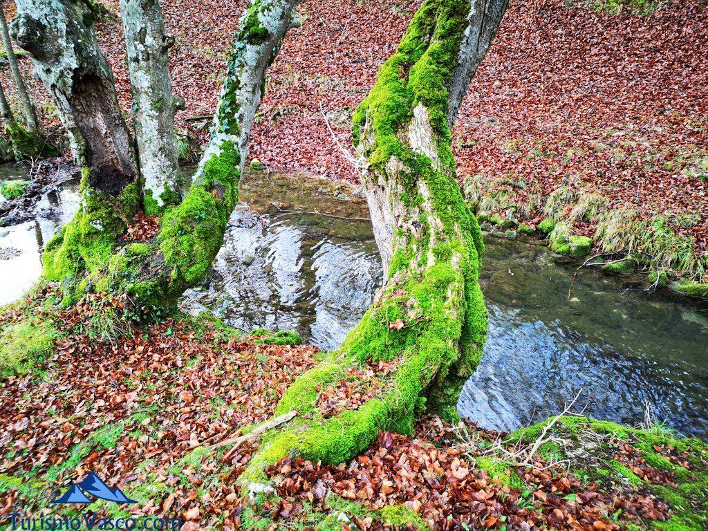 rio, Ruta Okina Saseta