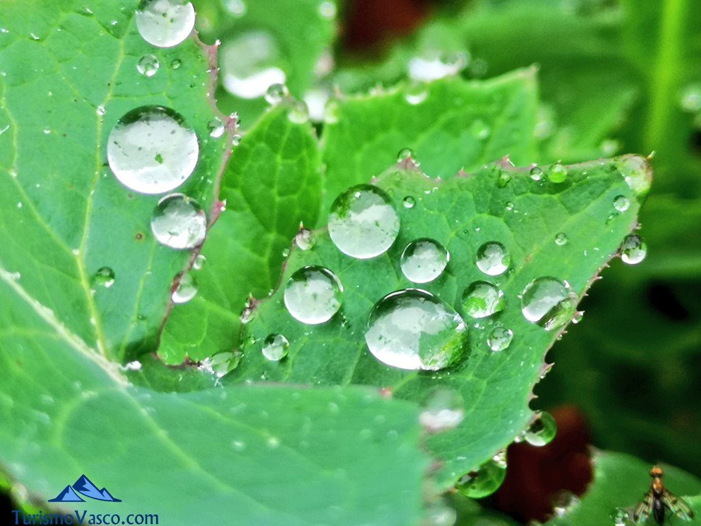lluvia, gotas, agua