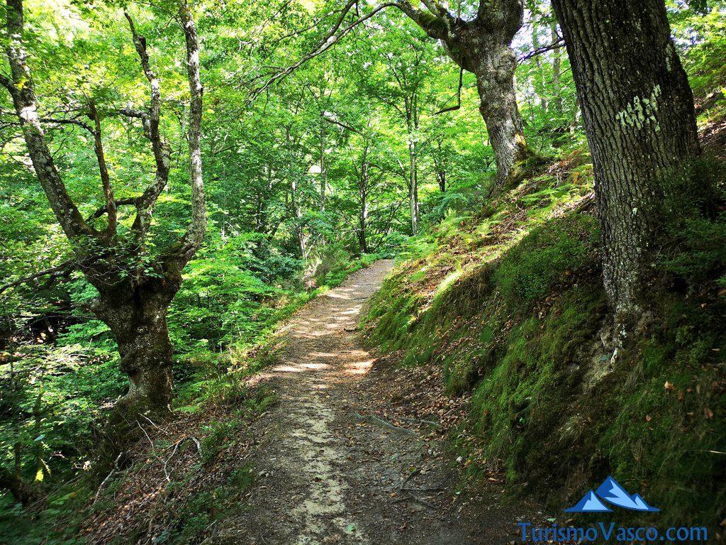 bosque, Nacedero del río Zirauntza