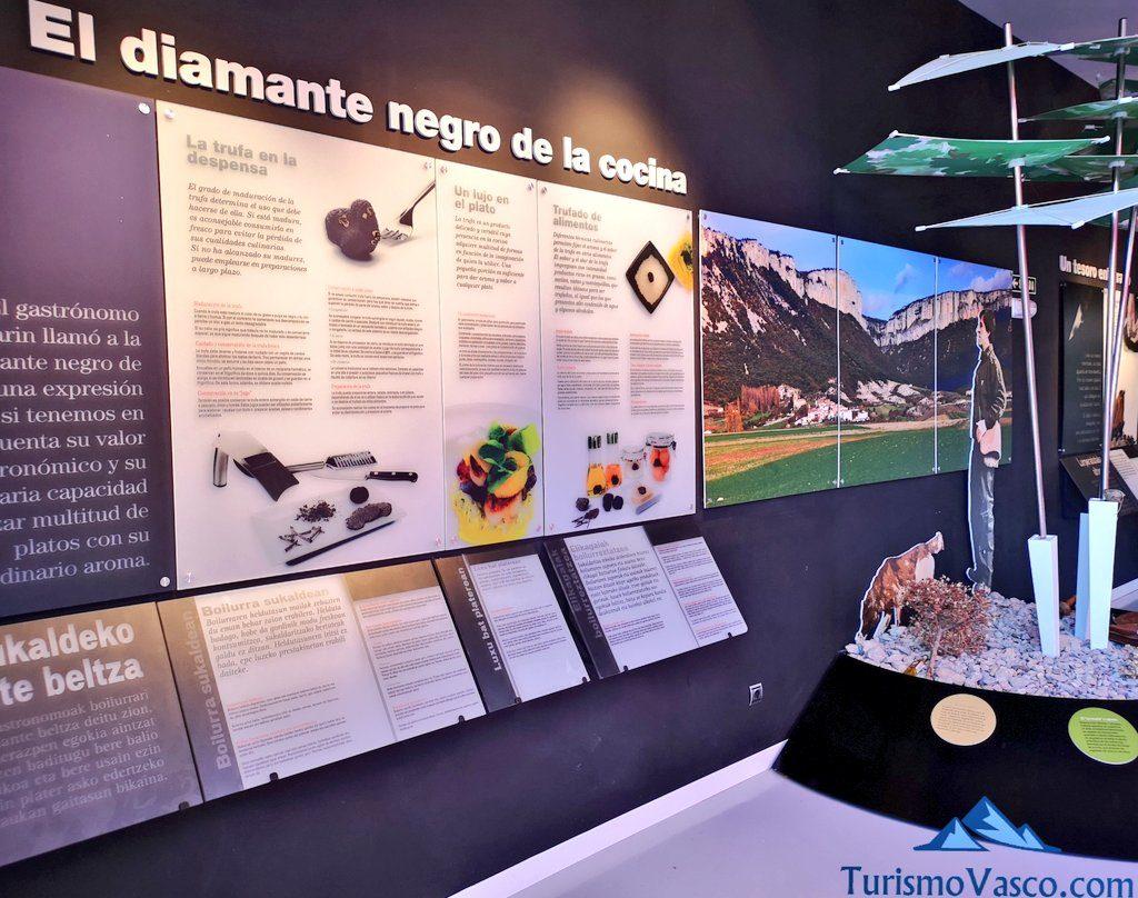 interior museo, trufaexperiencia experiencia trufa navarra