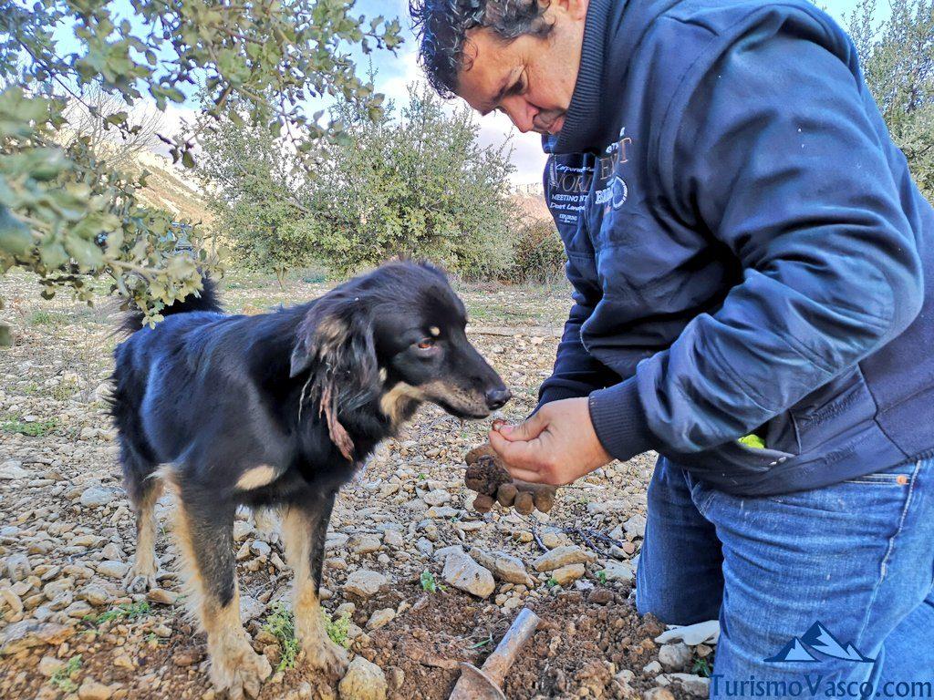 perro trufa, trufaexperiencia experiencia trufa navarra