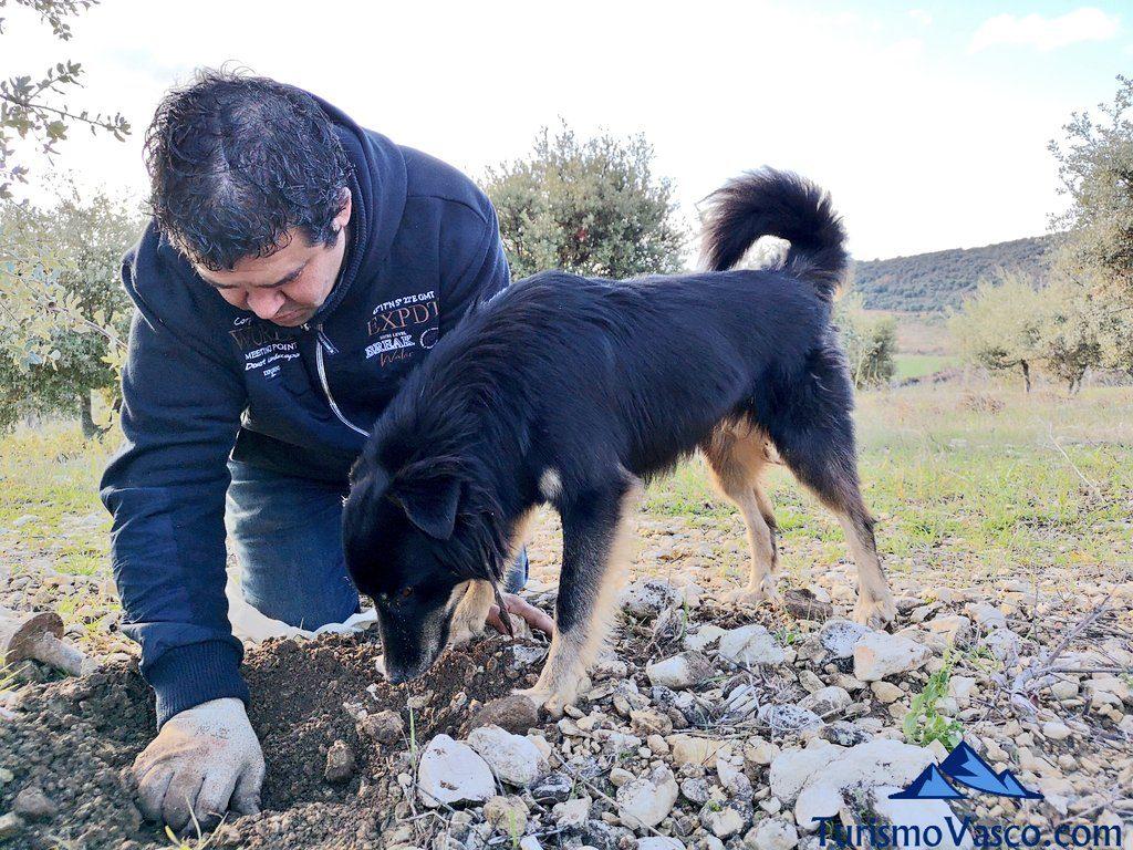 perro, trufaexperiencia experiencia trufa navarra