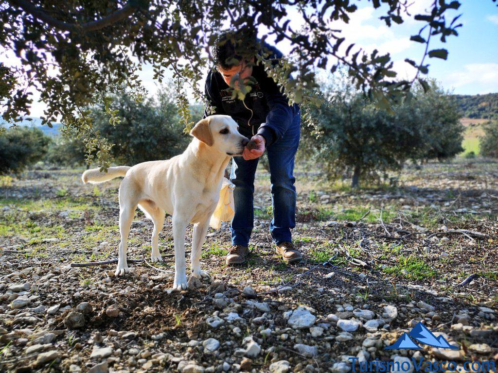 perro trufero, trufaexperiencia experiencia trufa navarra