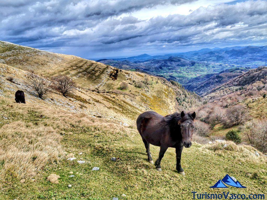 caballo, Hernio desde Iturriotz