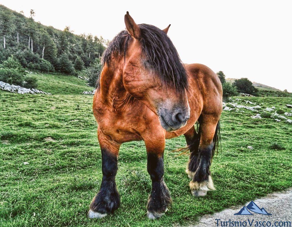 caballo. cueva de Harpea