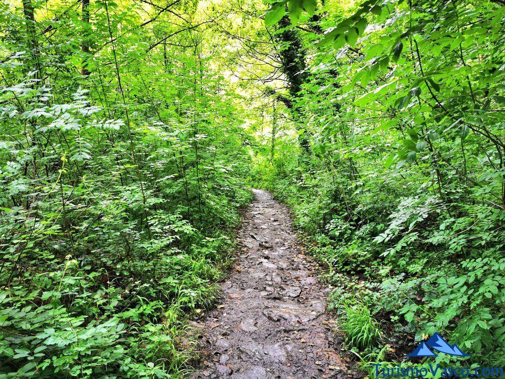 intensos verdes, Bolintxu ruta cascada