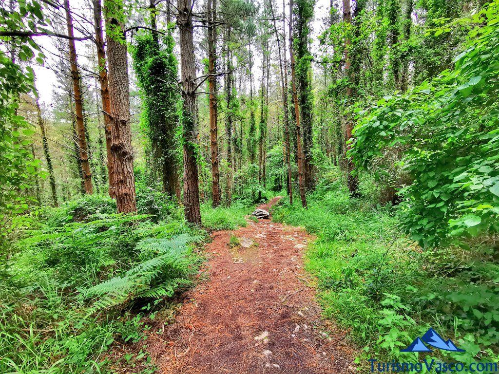 ruta en el bosque, San Pedro Atxarre ruta Urdaibai