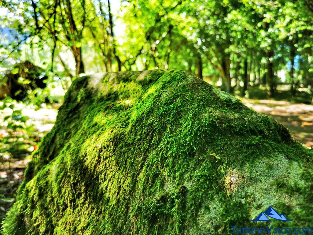 berdin roca, baños de bosque en Euskadi
