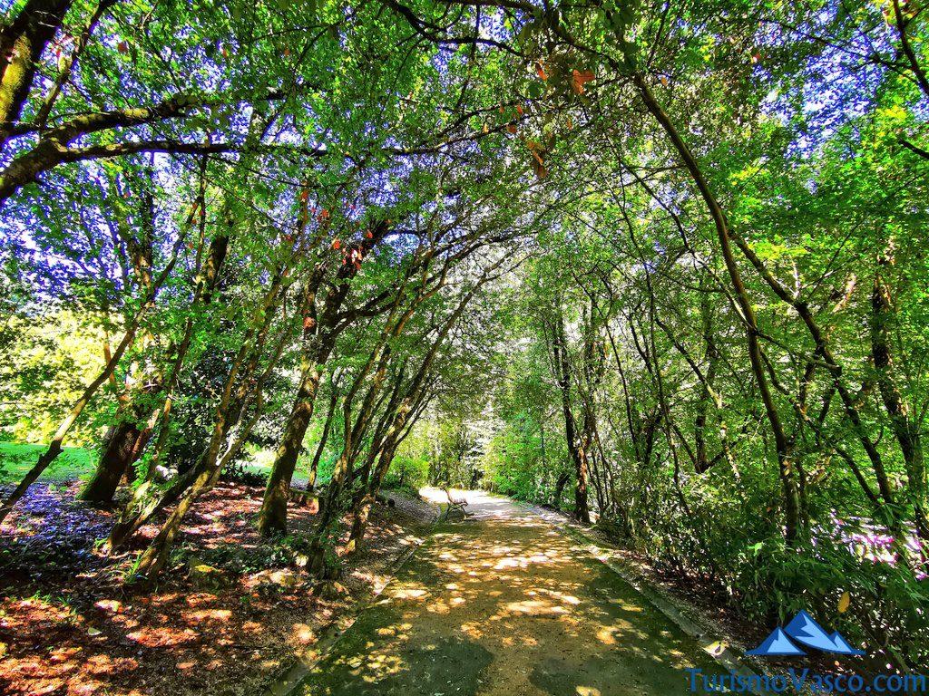 bosque, baños de bosque en Euskadi