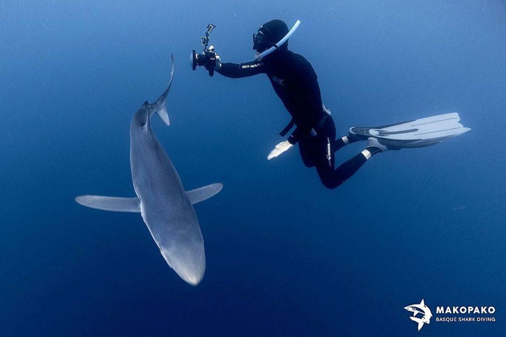 buzo, Nadar con tiburones en Euskadi