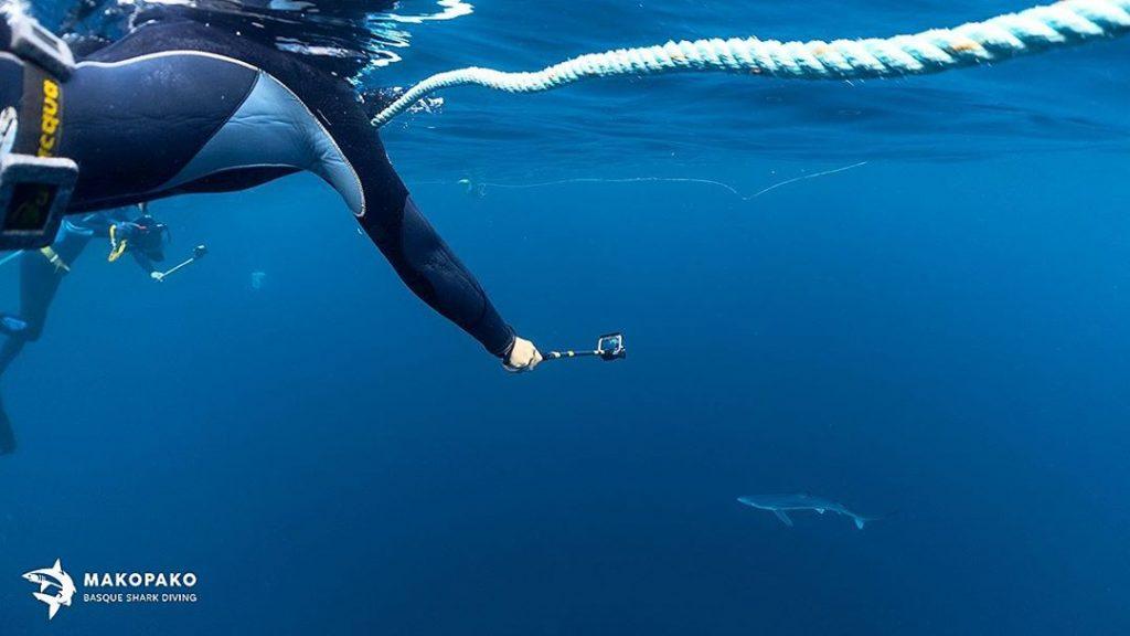 grabando tiburones con gopro, Nadar con tiburones en Euskadi