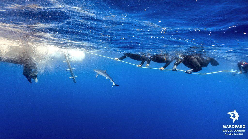 nadando con tiburones, nadar con tiburones en Euskadi