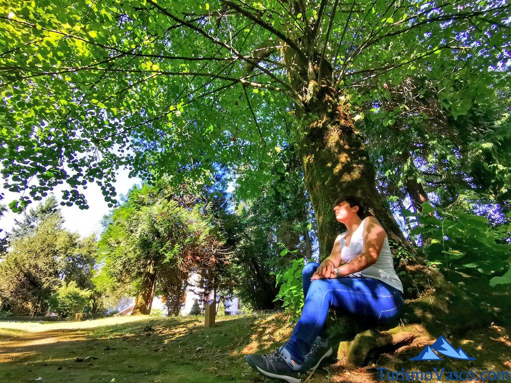 relax, baños de bosque en Euskadi