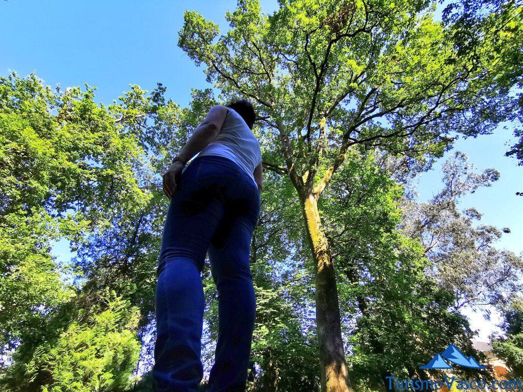 sintiendo el bosque, baños de bosque en Euskadi