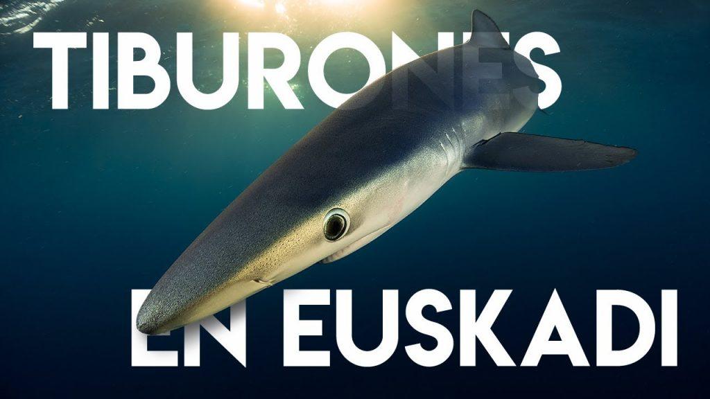 tiburones en euskadi, nadar con tiburones en Euskadi