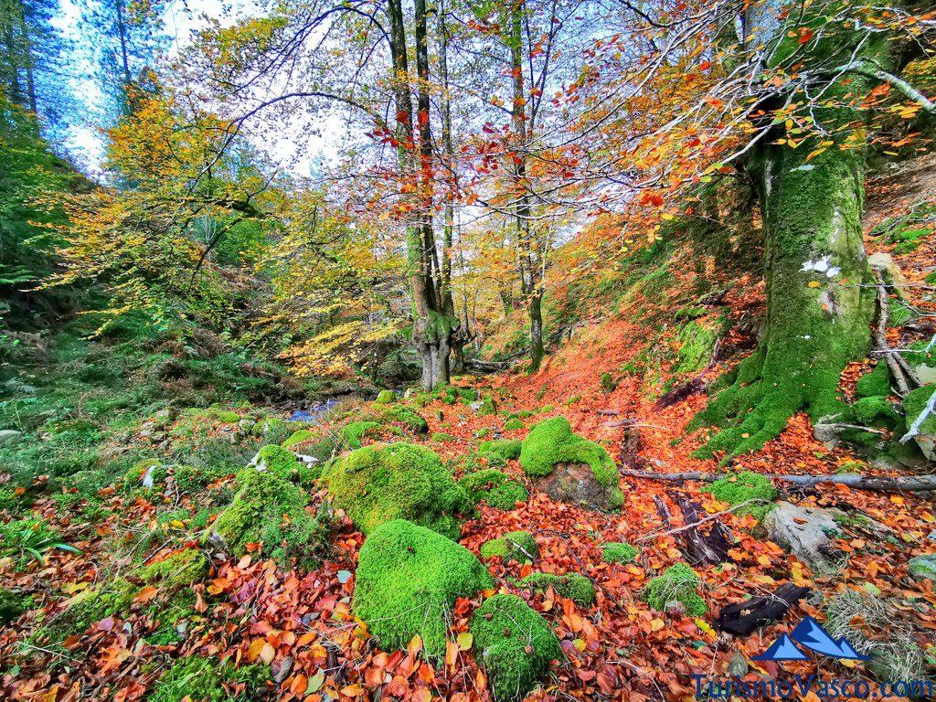otoño, Cascada Belaustegi Hayedo Orozko