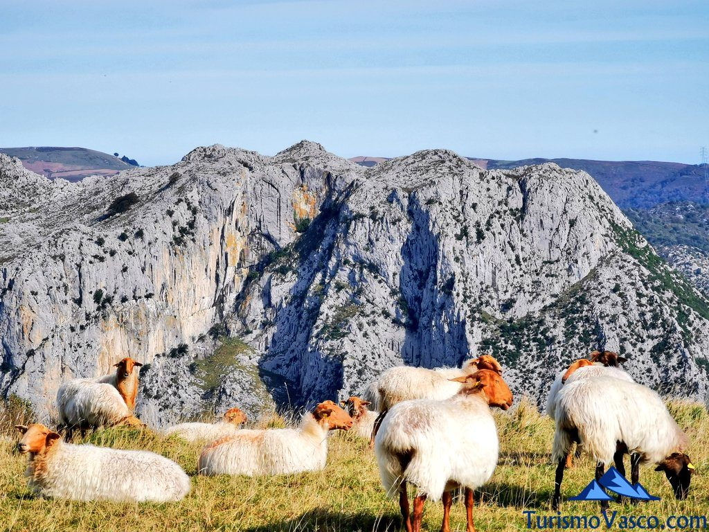 ovejas junto a la Ventana Relux Karrantza