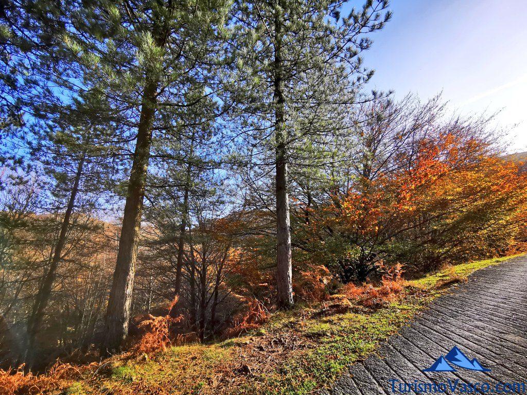 ruta entre pinos y hayas, Cascada de Belaustegi hayedo Orozko