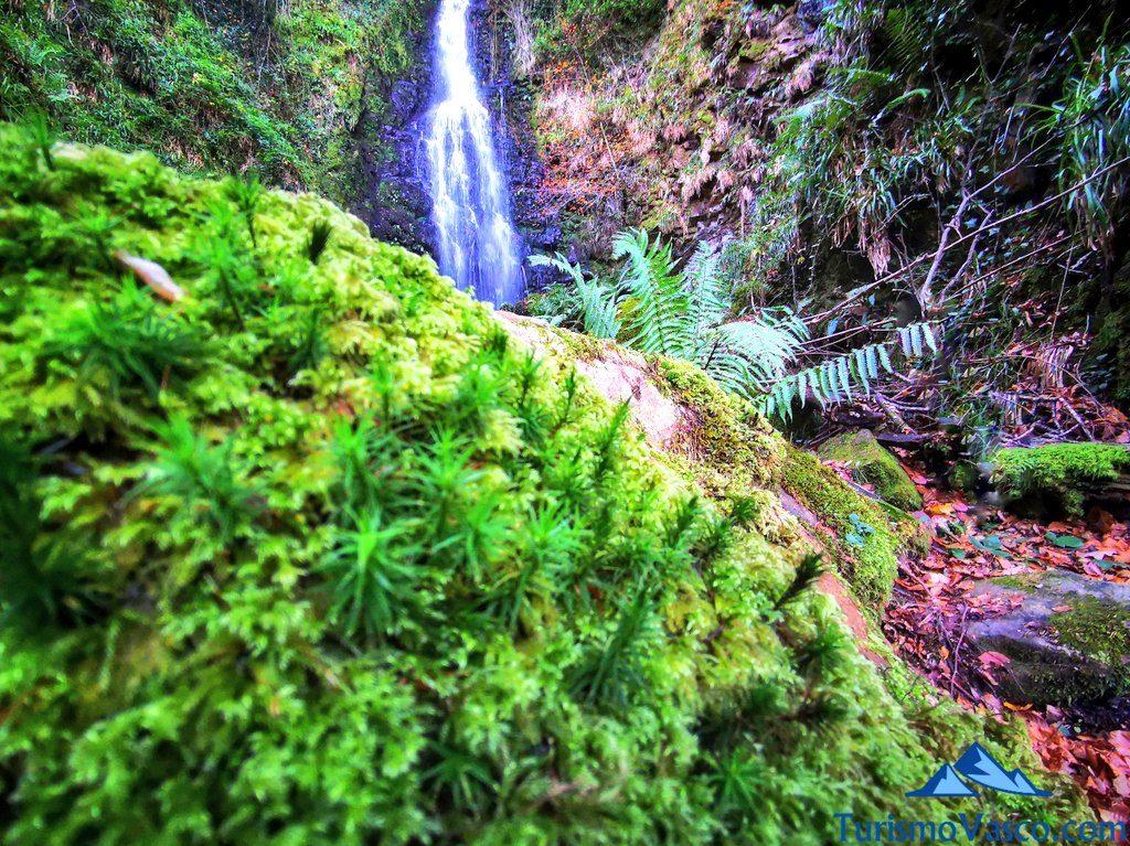berdin en la cascada, cascada de Belaustegi, Orozko