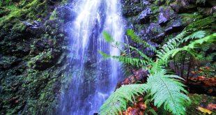 cascada de Belaustegi, Cascada de Belaustegi hayedo Orozko