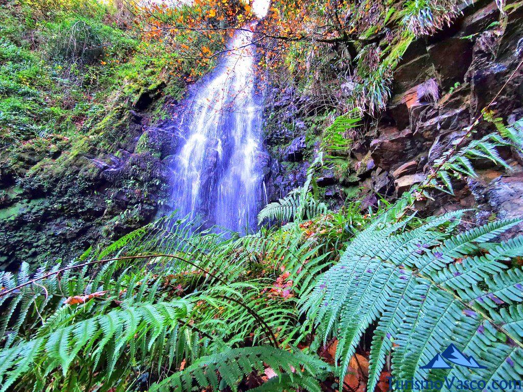 helechos en la cascada de belaustegi, cascada de Belaustegi, Orozko
