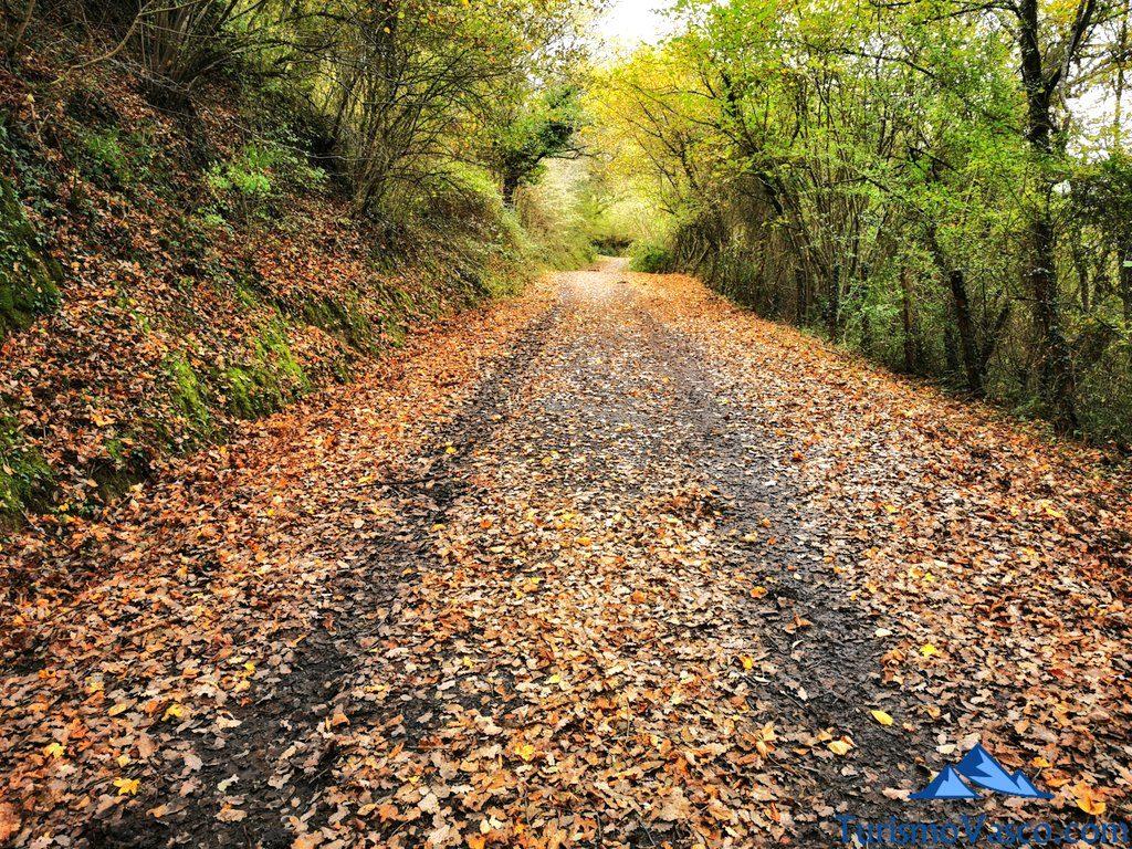 ruta , senda verde de delika, caños de delika