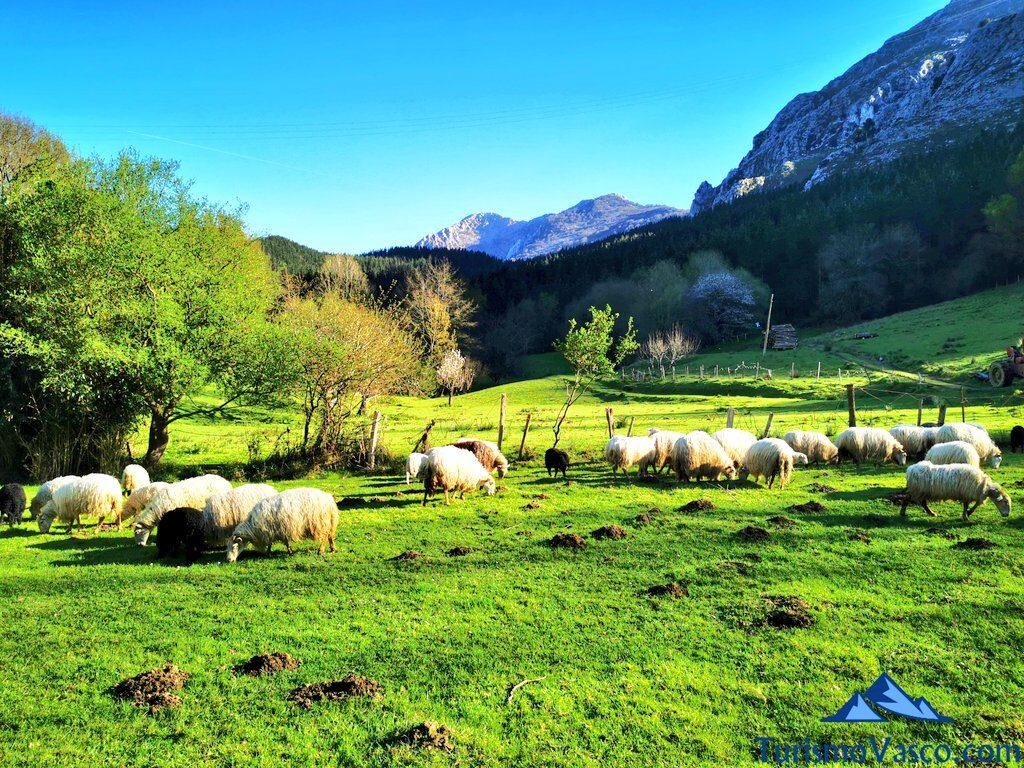 abadiño, parque natural de urkiola, pastor por un día en Euskadi