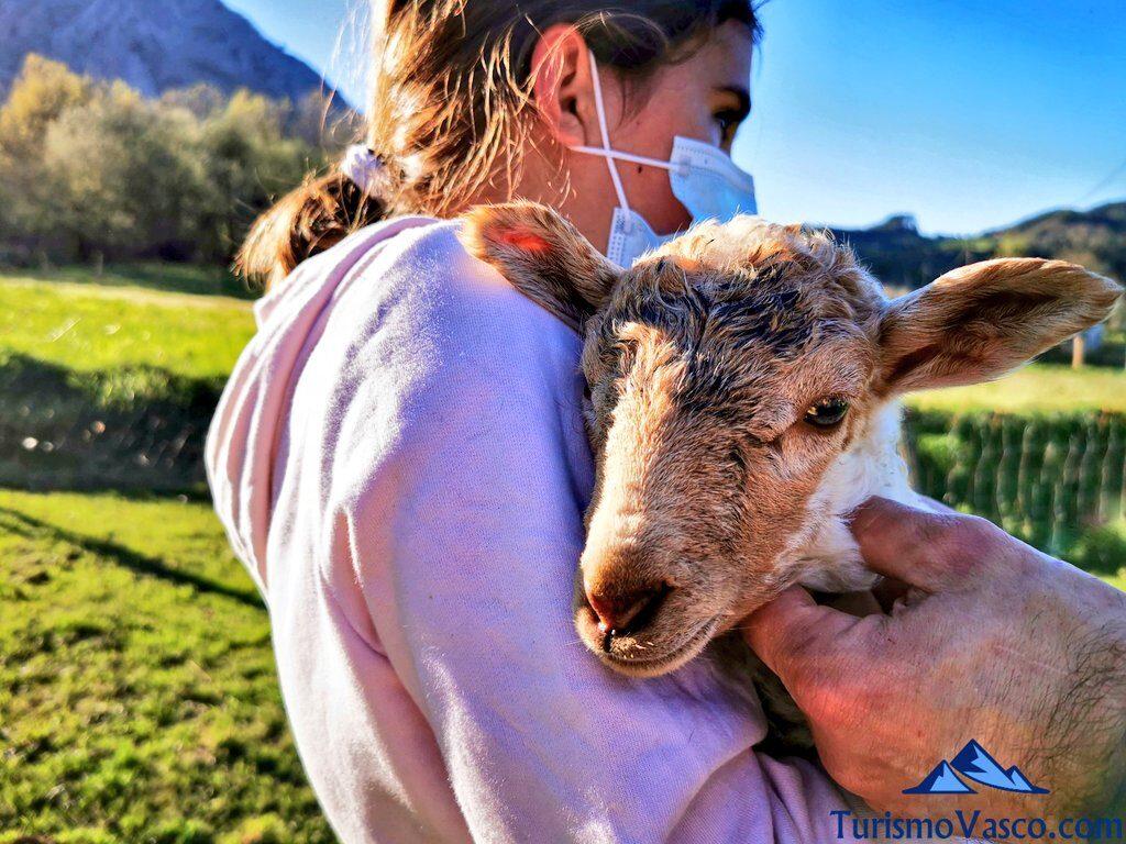 cordero alluitz natura, pastor por un día en Euskadi