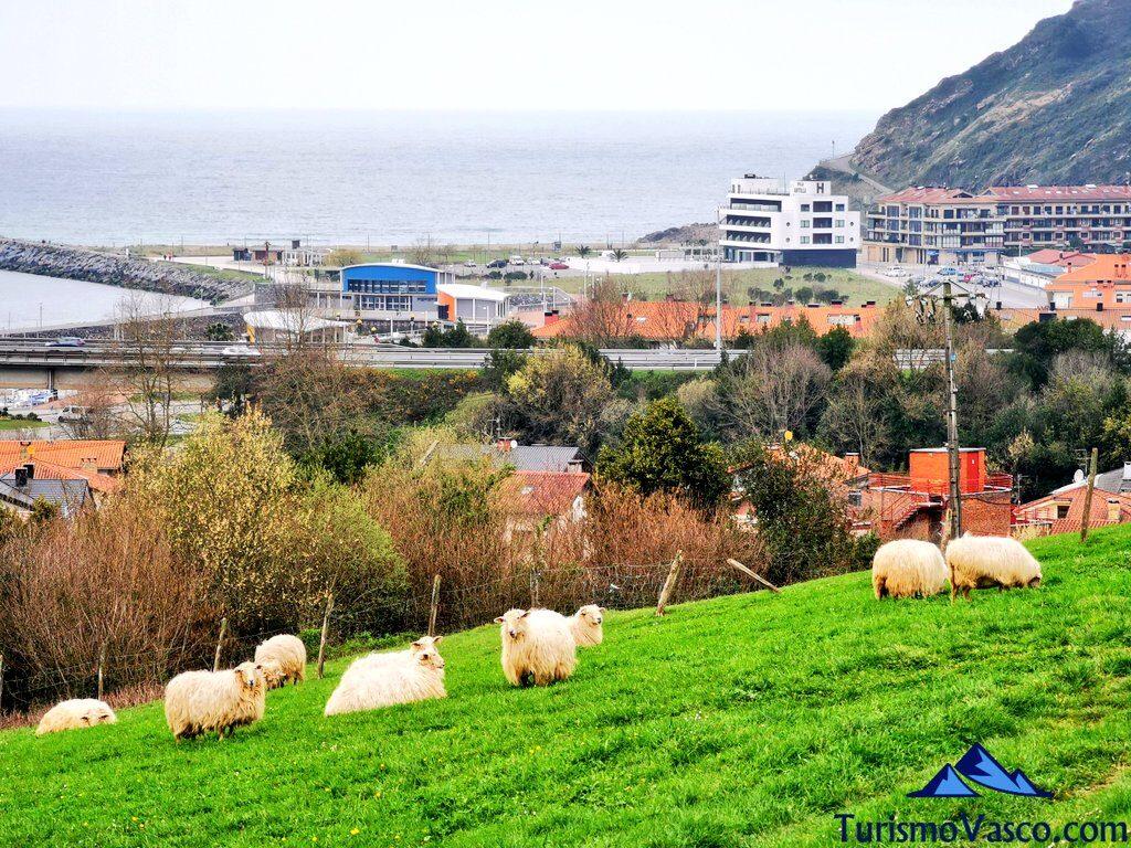 ovejas orio, qué ver en Orio