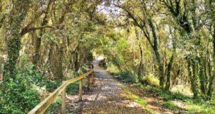camino de acceso a San Miguel de Ereñozar, Urdaibai