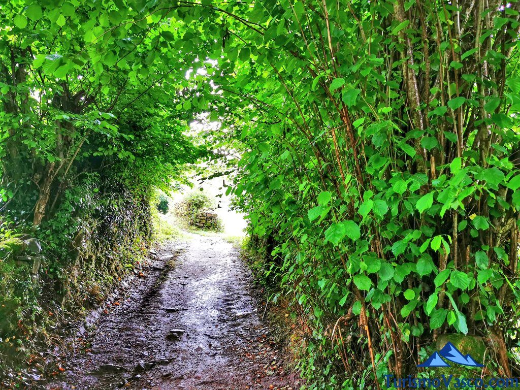 tunel de arboles camino a xorroxin, cascada de Xorroxin
