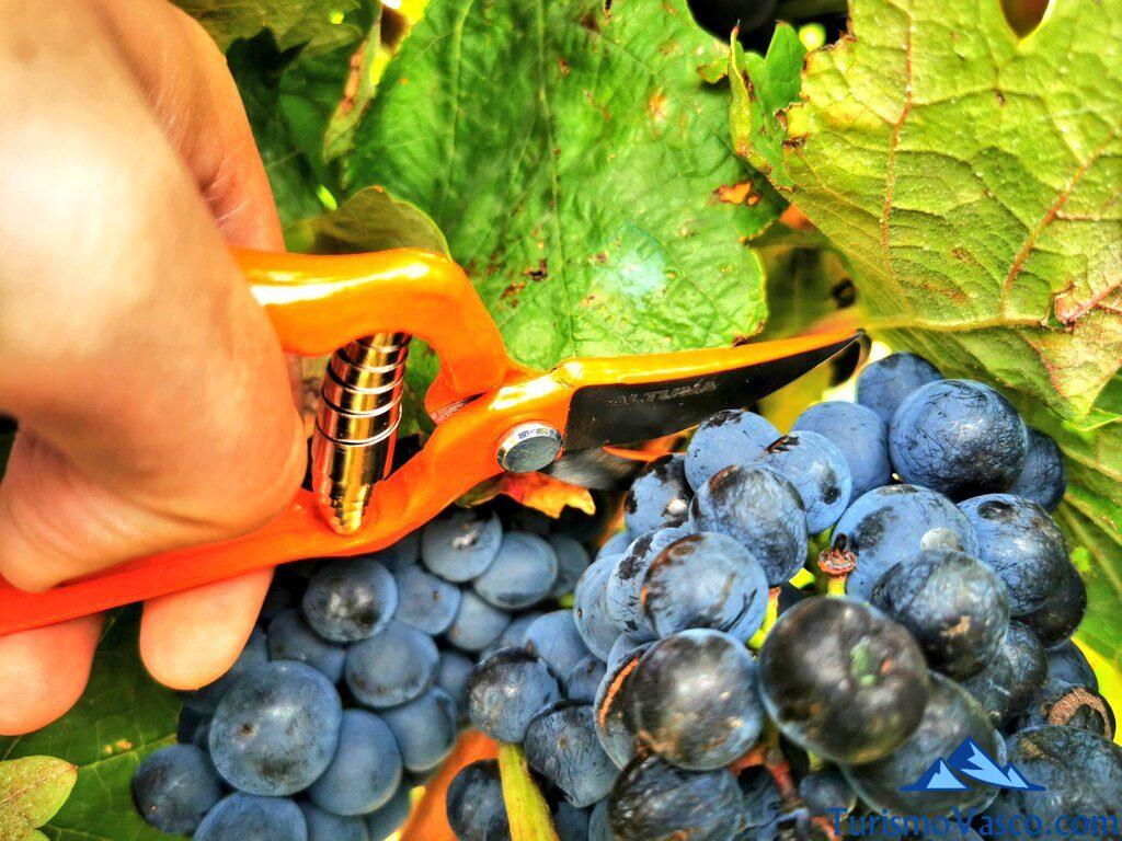 cortando racismo en rioja alavesa, vendimia en Rioja Alavesa, bodegas de Rioja Alavesa