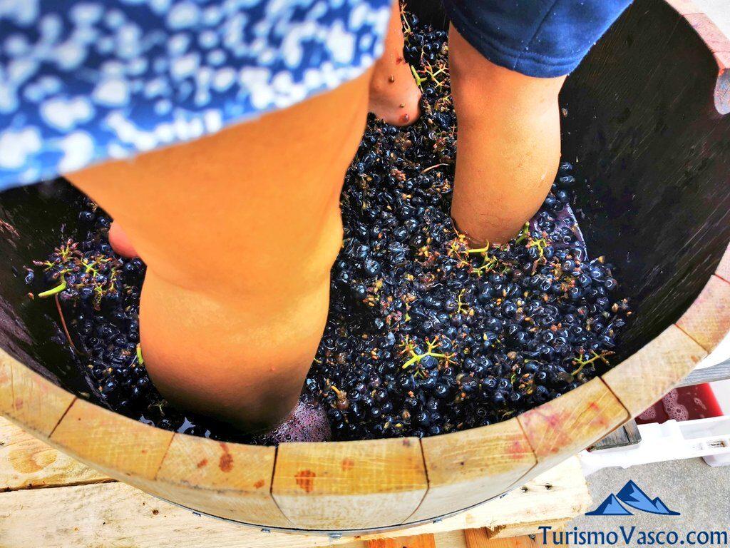 pisando uva en vendimia, rioja alavesa, vendimia en Rioja Alavesa, bodegas de Rioja Alavesa